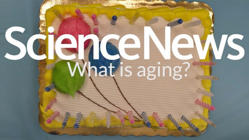 What is aging? | Science News 2
