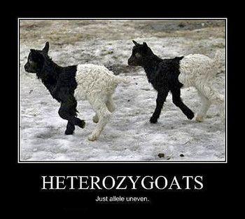 MENDELIAN GENETICS UNIT: LESSON 4: HOMOZYGOUS & HETEROZYGOUS ... 1