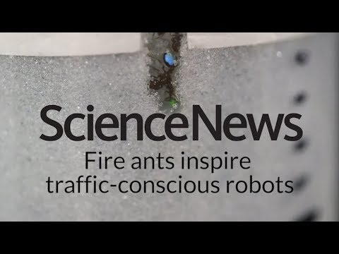 Fire ants inspire traffic-conscious robots | Science News 1
