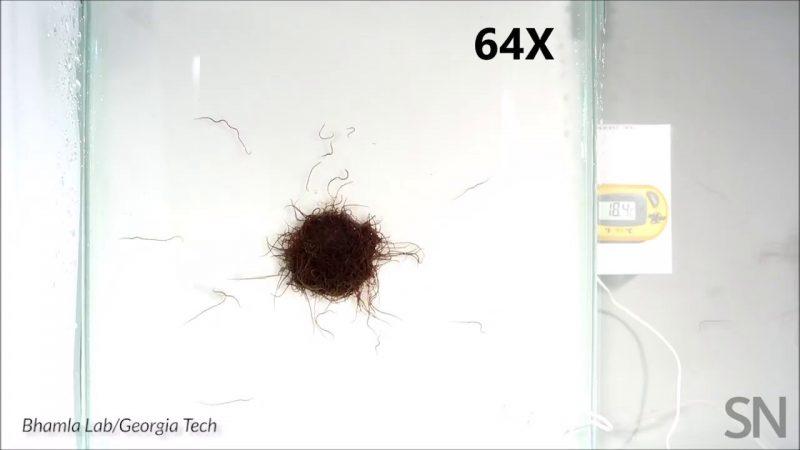 Watch a worm blob move as a mass | Science News 2
