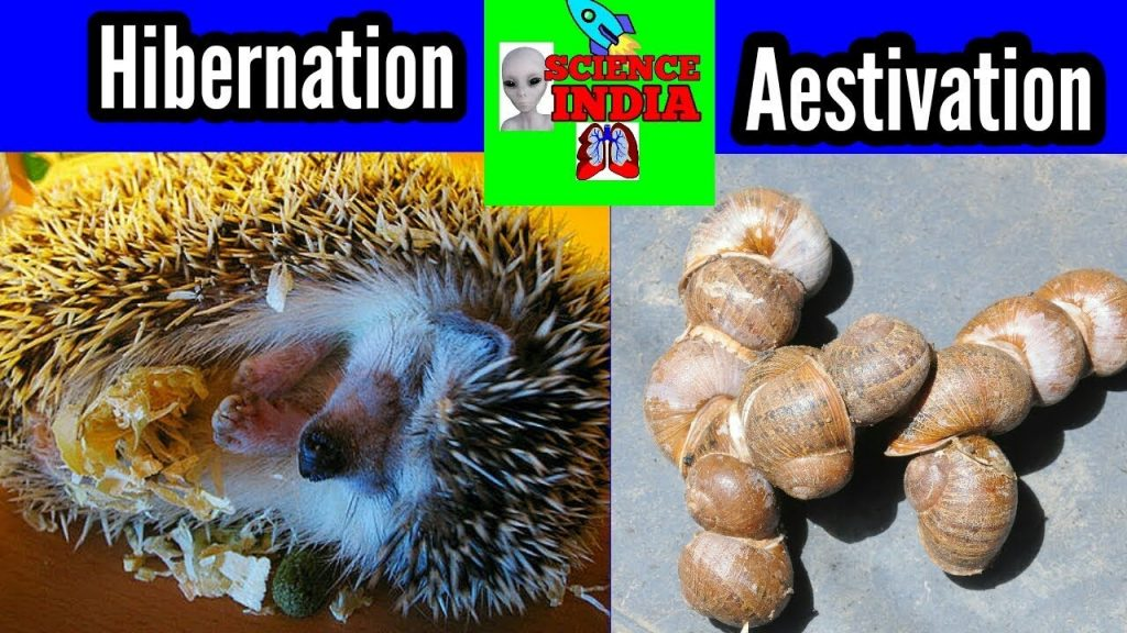 Hibernation -Aestivation -Science news India 1