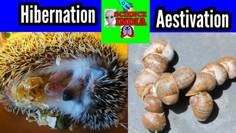 Hibernation -Aestivation -Science news India 2