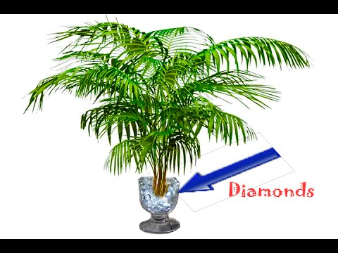Plant That Only Grows In Diamond Rich Soil Discovered | Science News 1