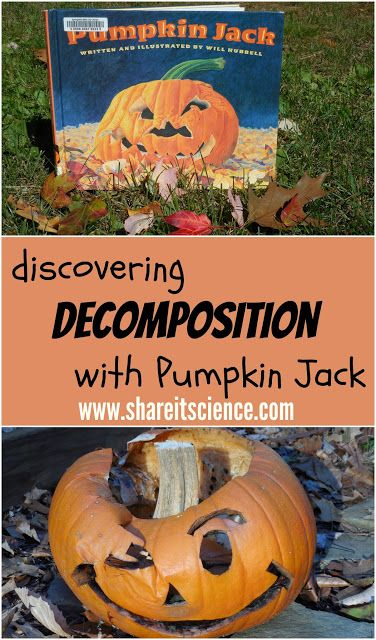 Share it! Science News : Discovering Decomposition with Pumpkin Jack. Activity a... 1