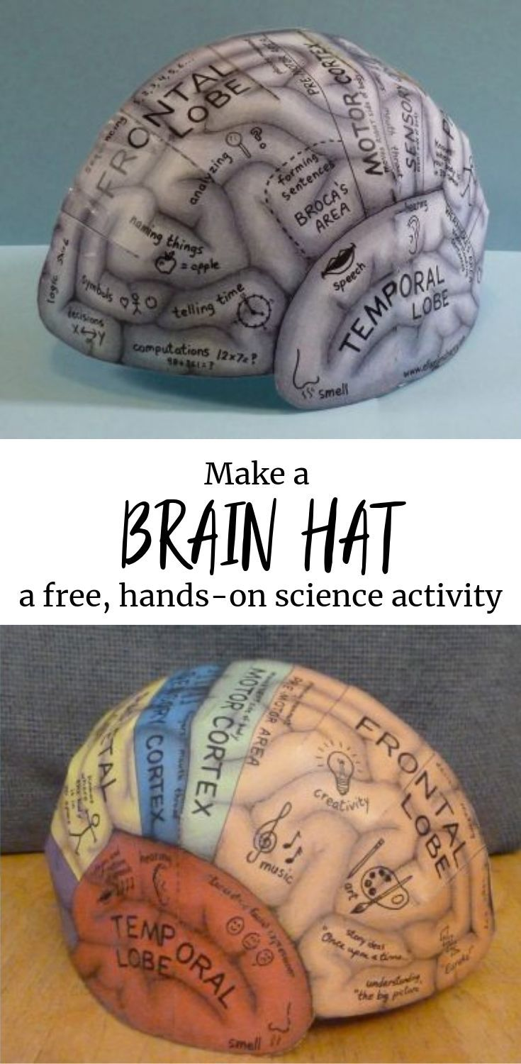 FREE! Make a brain hat! Learn about all the areas of the brain in this free and ... 2