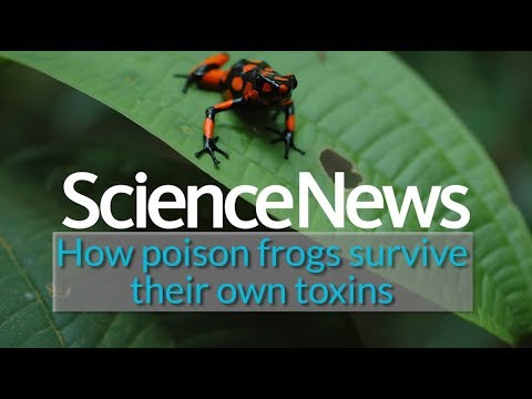 How poison frogs survive their own toxins | Science News 1