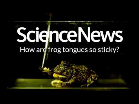 How are frog tongues so sticky? | Science News 1