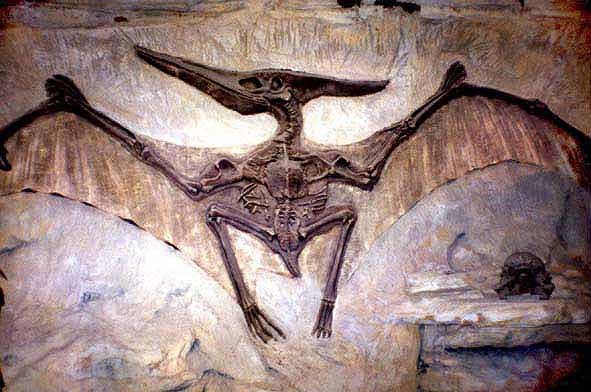New Flying Reptile Fossil Discovered - Science News 2008 - redOrbit.  Scientist ... 1