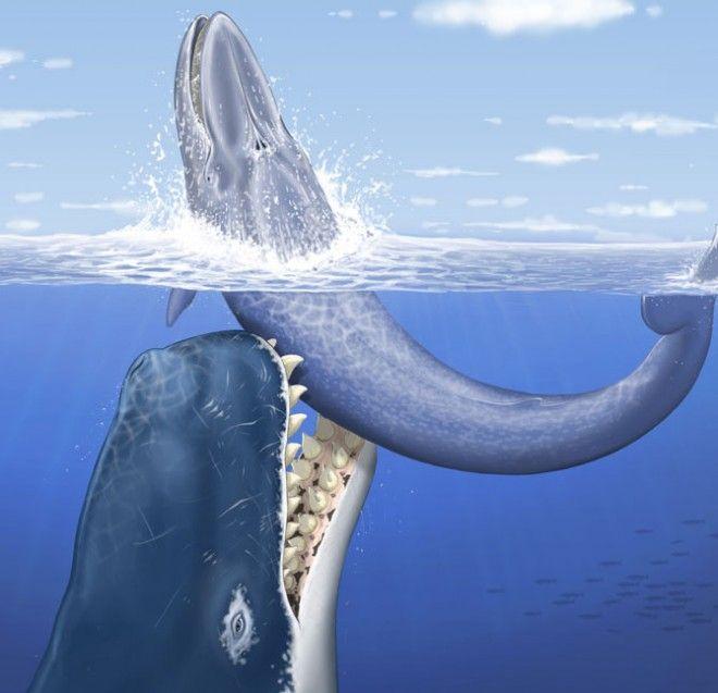 whaleshark_attack 1