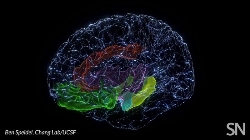 Brain areas involved in mood   Science News 2