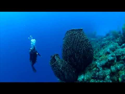 Giant barrel sponges loom over a Bahama reef | Science News 1