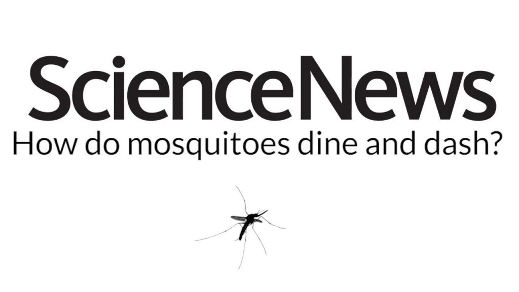 How do mosquitoes dine and dash? | Science News 1