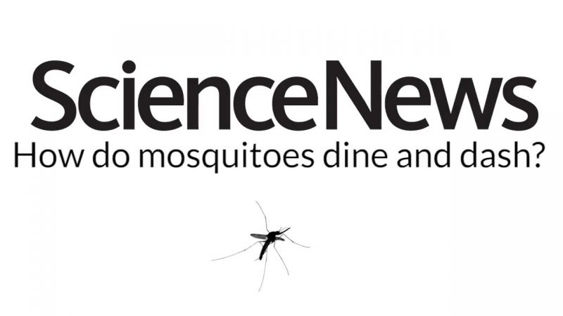 How do mosquitoes dine and dash? | Science News 2