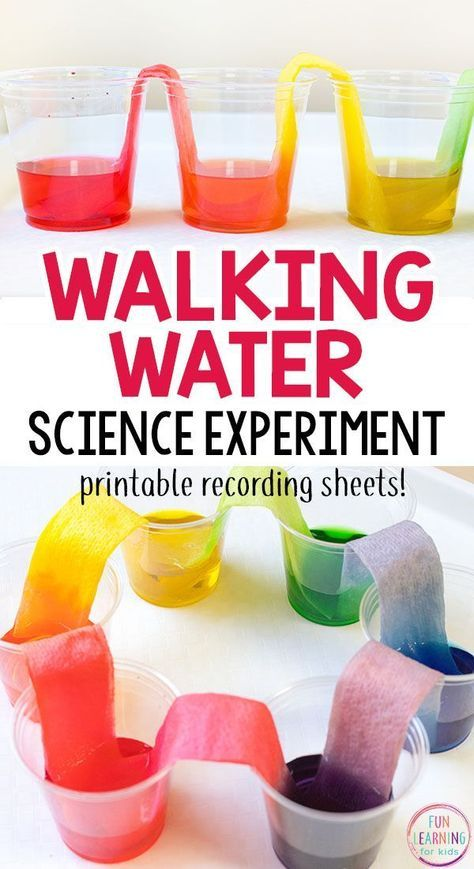 Walking water science experiment that is so much fun! This rainbow science activ... 1