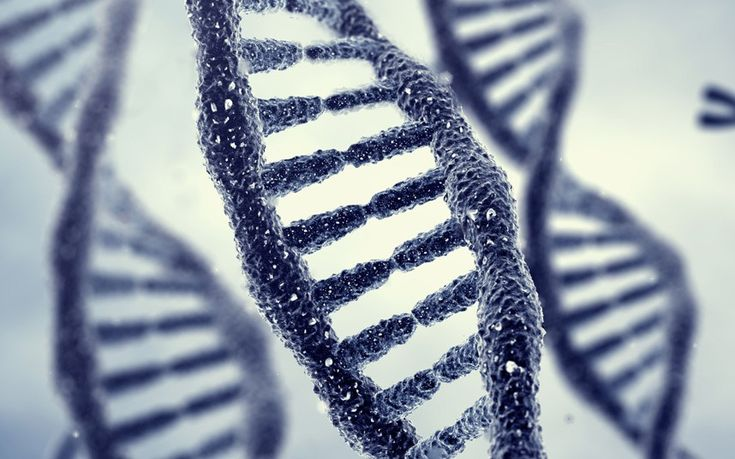 Memories may be passed down through generations in DNA in a process that may   b... 3