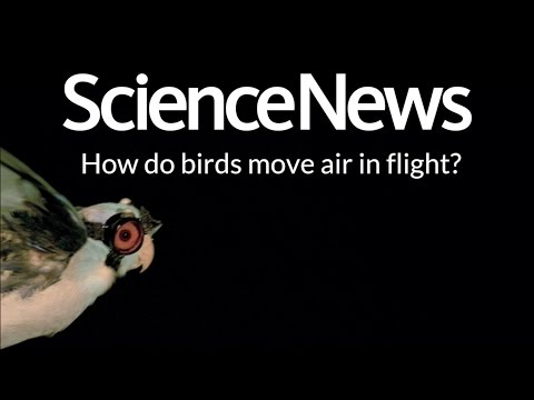 Pelican spider keeps prey at arm's length | Science News 1
