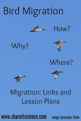 Share it! Science News : See it? Share it! Bird Migration 1