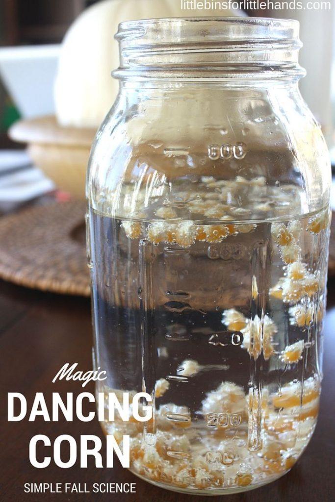 Dancing Corn Thanksgiving Science Activity 1