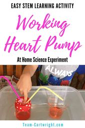 Make a working heart pump model at home! This is surprisingly easy to put togeth... 1