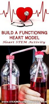 This Heart STEM activity to build a functioning heart model uses all 4 STEM pill... 1