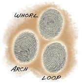 Succession Science: Are Fingerprint Patterns Inherited? 3
