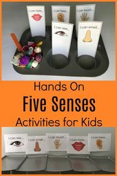 Exploring all 5 Senses in Preschool: Sorting Activities and Books • The Preschool Toolbox Blog 5