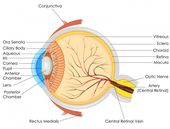Yellow eyes: Causes in newborns, children, and adults 4
