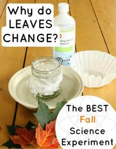 Science Experiments for Kids: Why do Leaves Change Color? 4