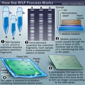 How DNA Profiling Works 1