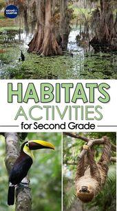 Hands-on Habitats Activities for Second Grade Scientists   Ecosystem activities, Habitats, Science e 1