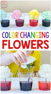 Color Changing Flowers Science Experiment 1